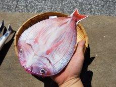 画像18: 【グロいけど...売れています】キャビネット『魚ケース』(各種) (18)