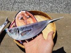 画像15: 【グロいけど...売れています】キャビネット『魚ケース』(各種) (15)