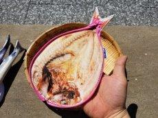 画像16: 【グロいけど...売れています】キャビネット『魚ケース』(各種) (16)