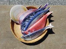 画像5: 【グロいけど...売れています】キャビネット『魚ケース』(各種) (5)