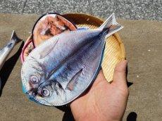 画像14: 【グロいけど...売れています】キャビネット『魚ケース』(各種) (14)