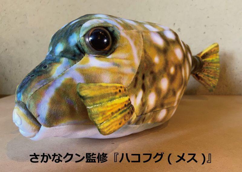 画像1: 【さかなクン監修】ハコフグ(メス)『ぬいぐるみ』 (1)